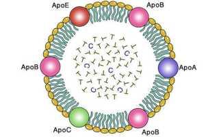 Хиломикроны – что это такое, роль и функции в организме