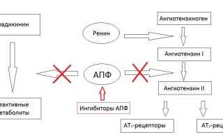 Ингибиторы АПФ (иАПФ) – список препаратов, механизм действия