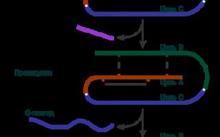 Что такое инсулин: структура, разновидности