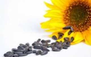 Можно ли семечки при панкреатите или нет:  какие лучше есть